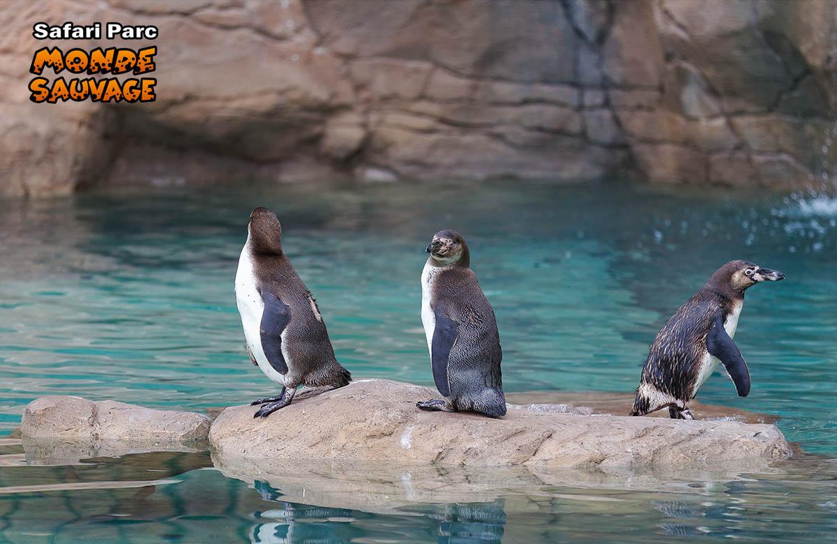 Monde sauvage safaripark aywaille de dieren het park de waterdieren - Le monde sauvage meubles ...