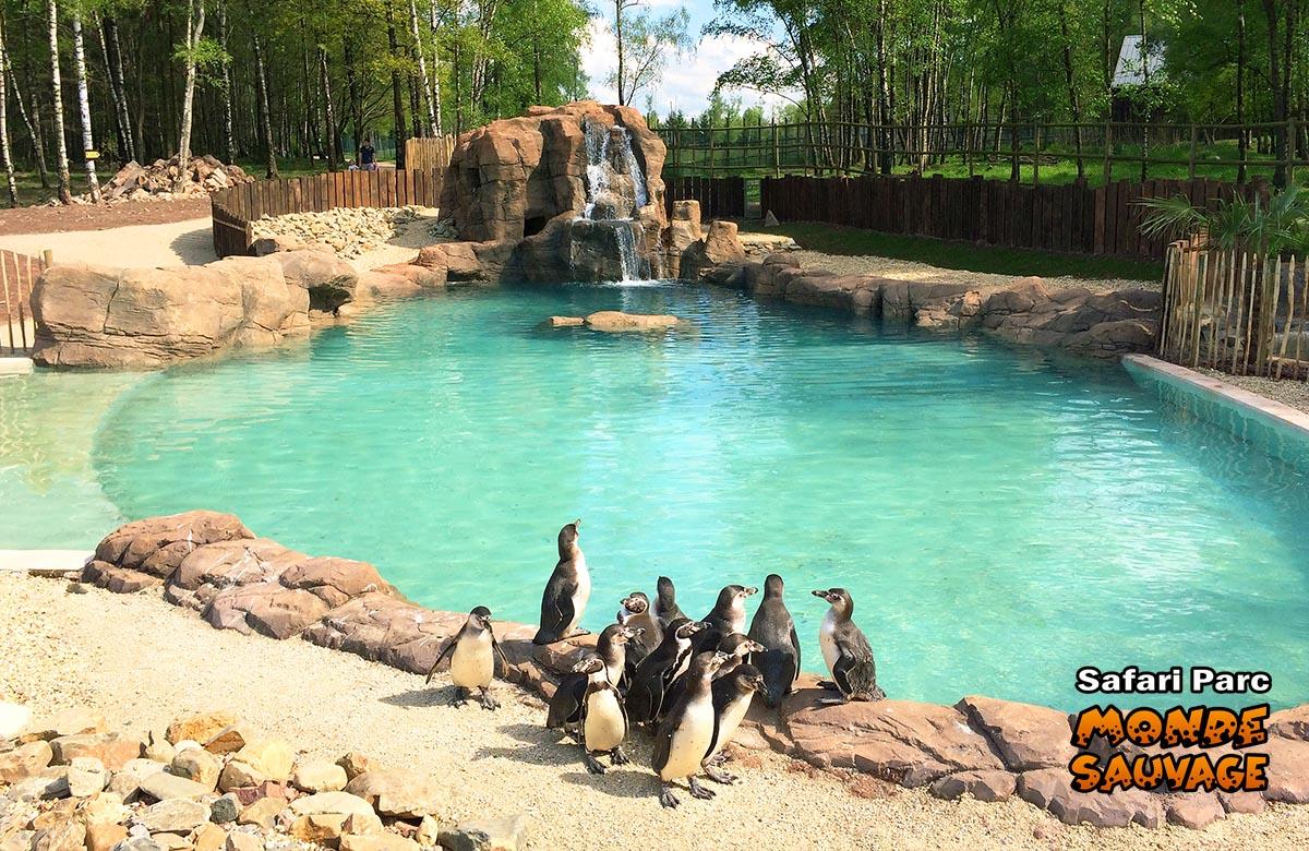 monde sauvage safari parc aywaille parc animalier zoo le parc les animaux aquatiques. Black Bedroom Furniture Sets. Home Design Ideas