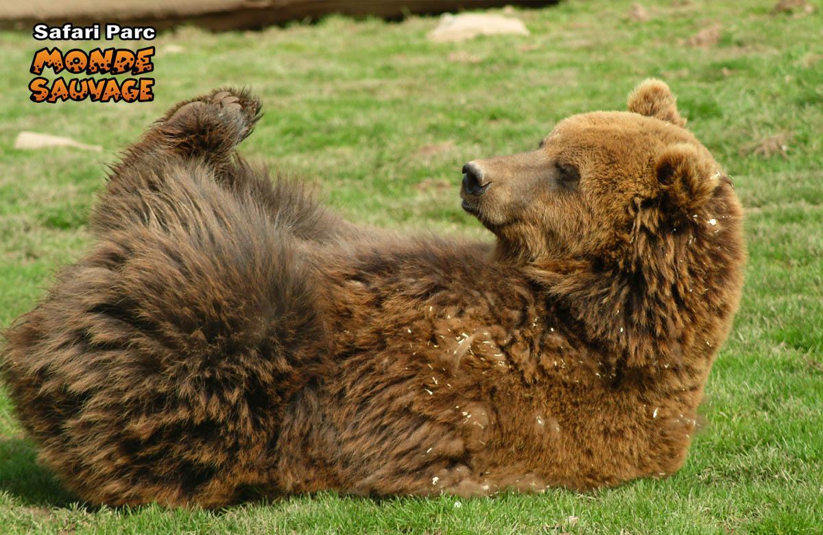 monde sauvage safari parc aywaille parc animalier zoo le parc le canyon des ours. Black Bedroom Furniture Sets. Home Design Ideas