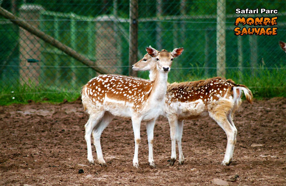 monde sauvage safari parc aywaille parc animalier zoo le parc le gibier de chez nous. Black Bedroom Furniture Sets. Home Design Ideas