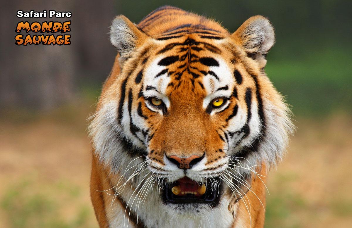 Monde sauvage safaripark aywaille de dieren het park parc animalier s - Le monde sauvage meubles ...