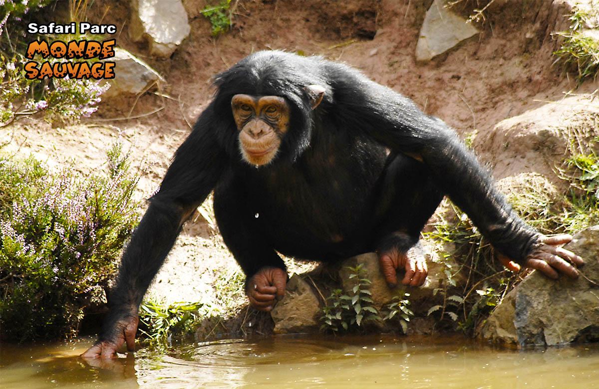 Monde sauvage safaripark aywaille de dieren het park le aux singes - Le monde sauvage meubles ...