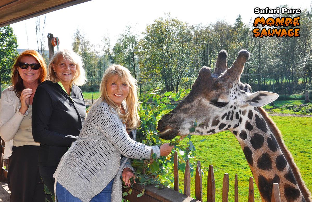 monde sauvage safaripark aywaille de dieren het park het observatorium van de giraffen. Black Bedroom Furniture Sets. Home Design Ideas