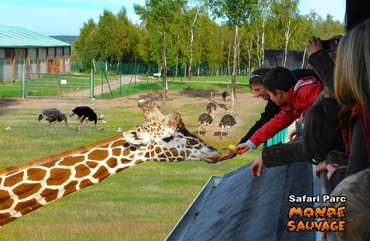 monde sauvage safari parc aywaille parc animalier zoo le parc l 39 observatoire des girafes. Black Bedroom Furniture Sets. Home Design Ideas