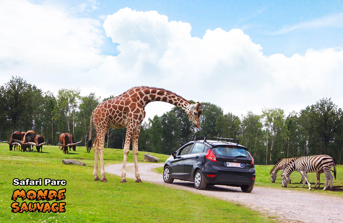monde sauvage safaripark aywaille de dieren het park parc animalier safari voiture. Black Bedroom Furniture Sets. Home Design Ideas