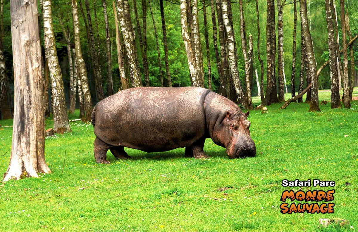 monde sauvage safari parc aywaille parc animalier zoo le parc safari africain. Black Bedroom Furniture Sets. Home Design Ideas