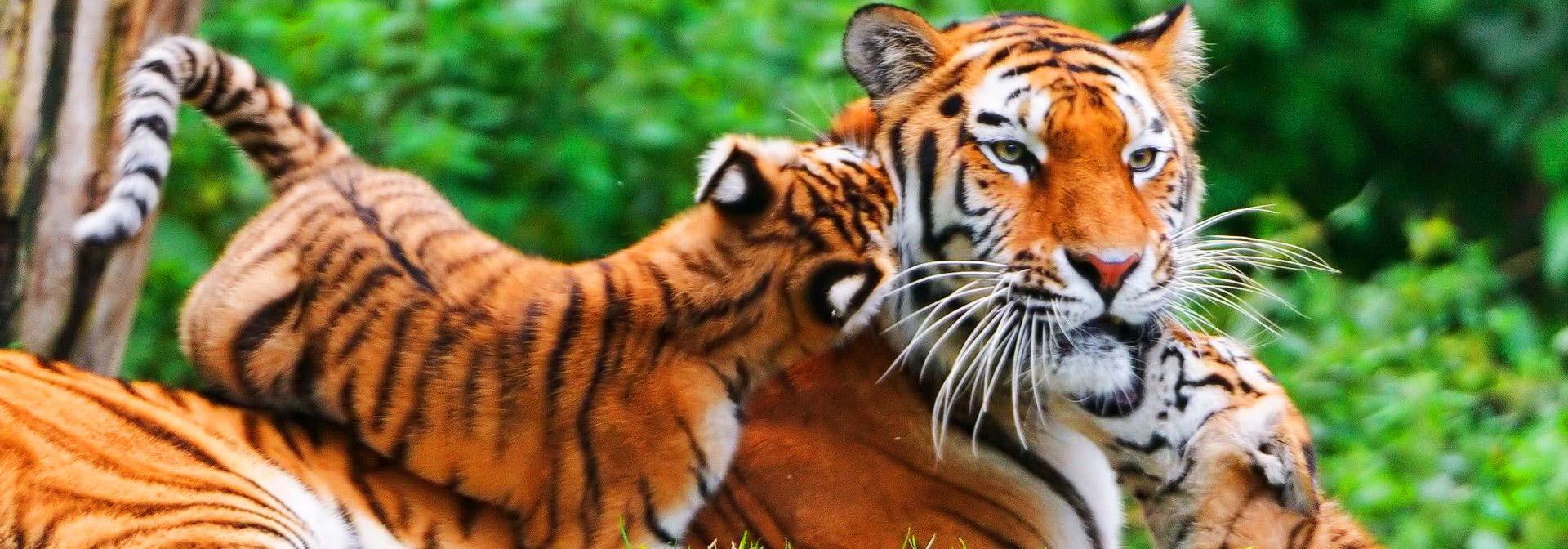 monde sauvage safari parc aywaille parc animalier zoo accueil parc animalier safari voiture. Black Bedroom Furniture Sets. Home Design Ideas